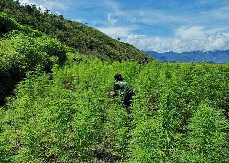 Sinunog na Marijuana